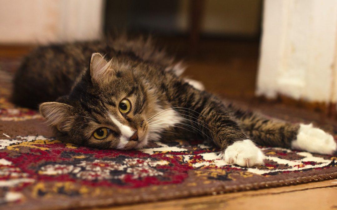 ¿Se puede tener mascota y una alfombra limpia?