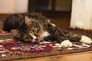 gato y alfombra pelos
